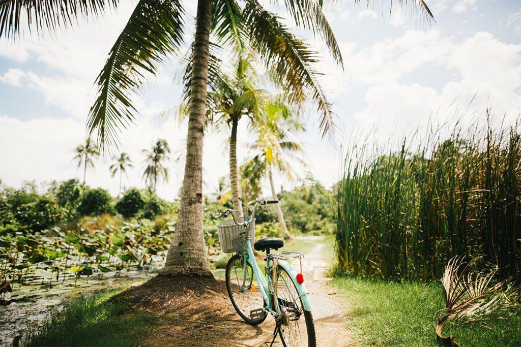 The Vitality Lab - Gewichtsconsulent Den Haag palmboom en fiets
